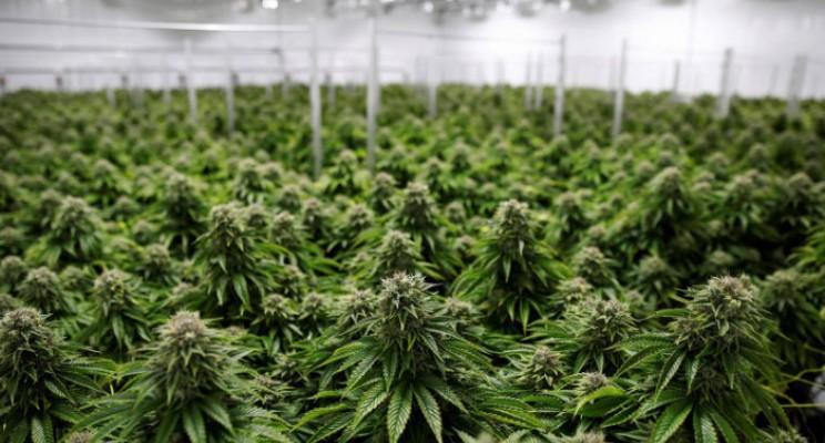 O (enorme) potencial do mercado latino americano da Cannabis medicinal